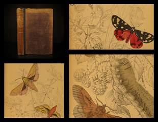1836 EXQUISITE Butterfly Art Jardine Butterflies