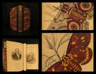 1841 Jardine Butterflies Moths Entomology