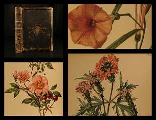 1879 BOTANICAL ART 1ed Flowers & Ferns America