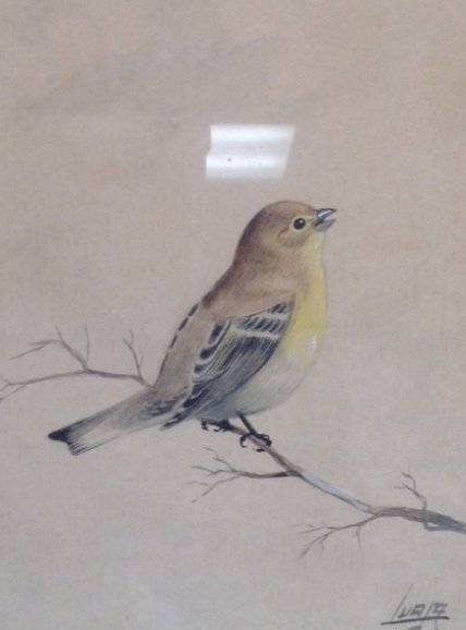 SIGNED WATERCOLOR PAINTING BIRD TREE BRANCH