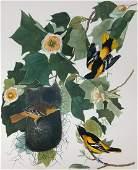 1964 Audubon Folio Print