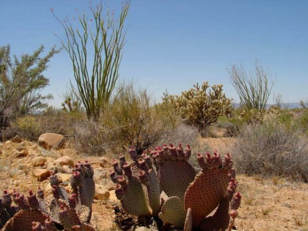21: Parcel # 245-08-076 -Lake Havasu Estates,Arizona