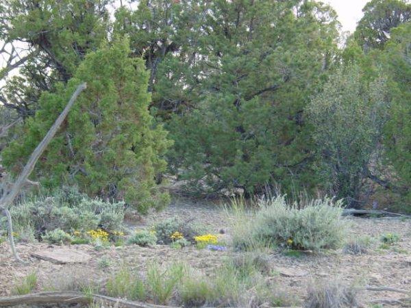 41: Lot #2, Hidden Creek Estates,Utah   - 10.59 acres