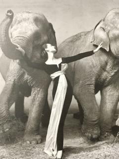 Richard Avedon, Dovima with the elephants, Dior, Cirque