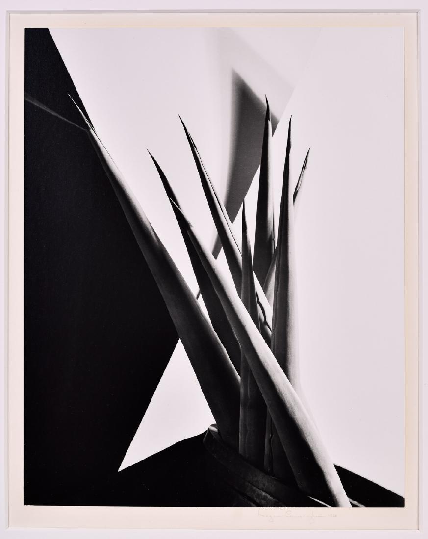Imogen Cunningham, Agave Design I Pencil Signed Dated