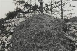 """Lee Friedlander """"Tokyo"""" Photograph"""