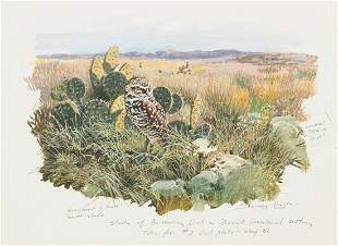 "John Seerey-Lester ""Study of Burrowing Owl"" Oil on"