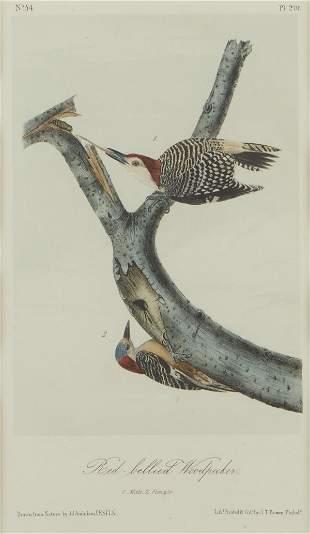 "John James Audubon ""Red Bellied Woodpecker"" Lithograph"
