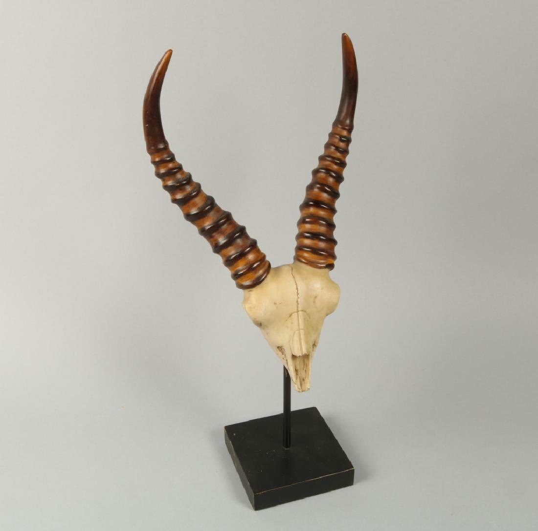 Small gezzell skull on stand
