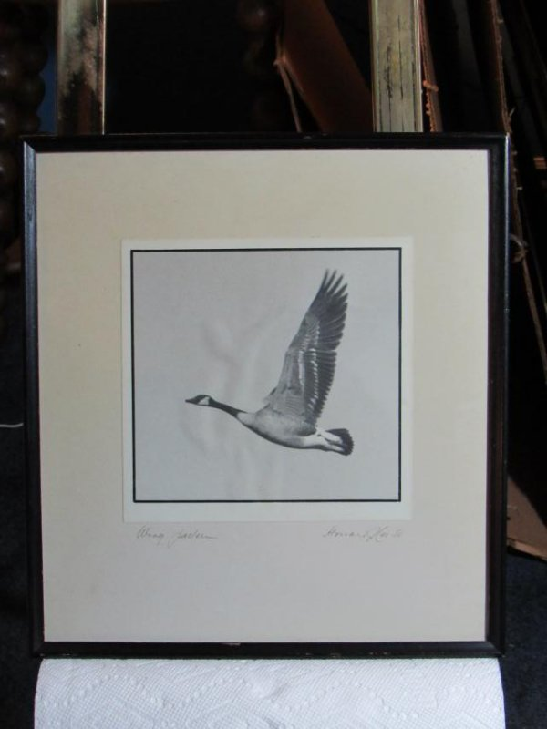 "Goose Photo ""Wing Pattern"" Framed Under Glass"