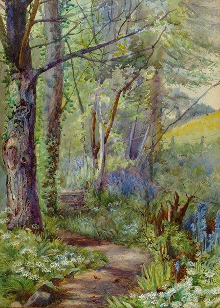 20: Edwards (E.H., 20th c.). Study of woodland trees, 1