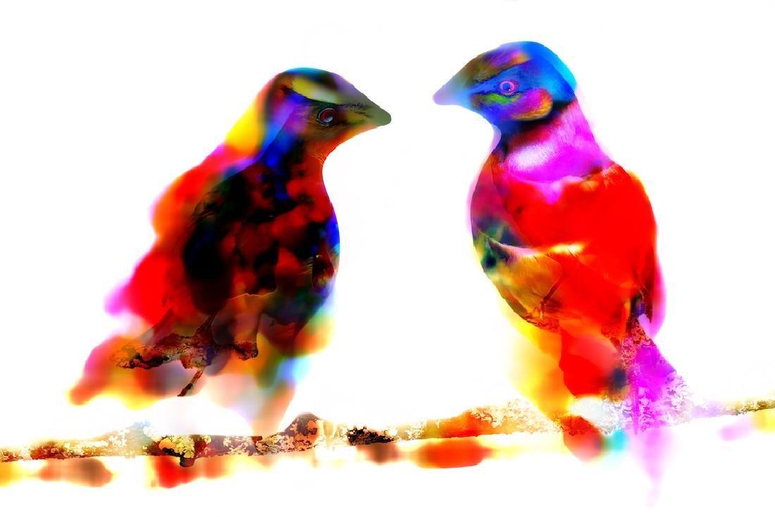 Two Birds | Pigment Print Platinum Edition