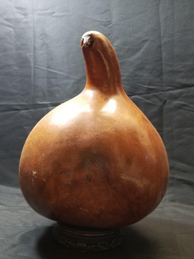 old  gourd