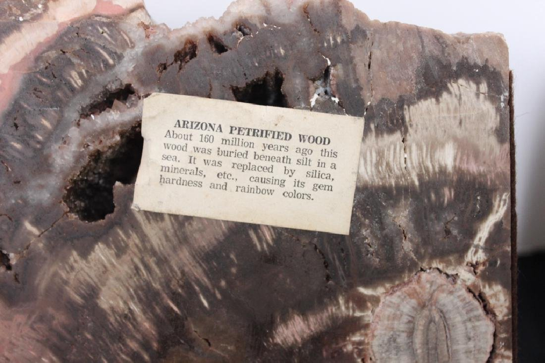 Arizona Petrified Wood - Pair of Bookends - 2