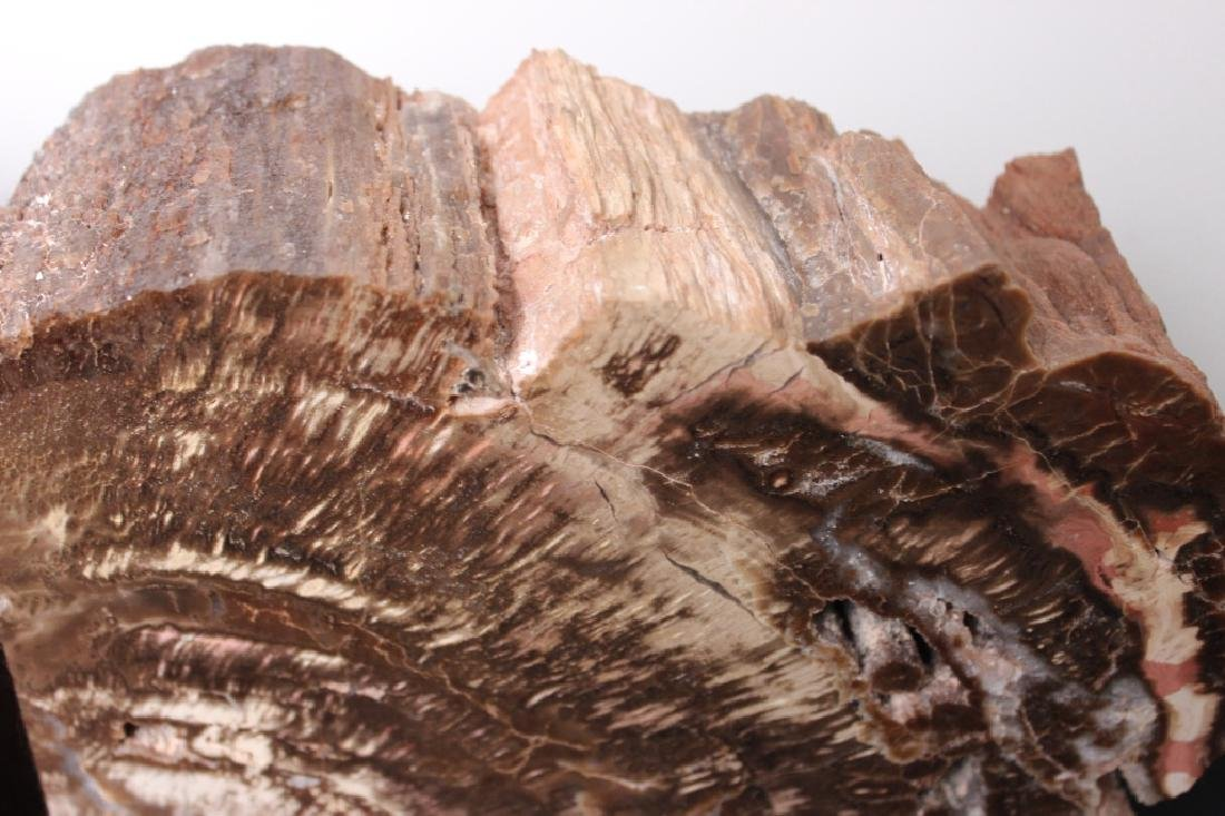Arizona Petrified Wood - Pair of Bookends - 3