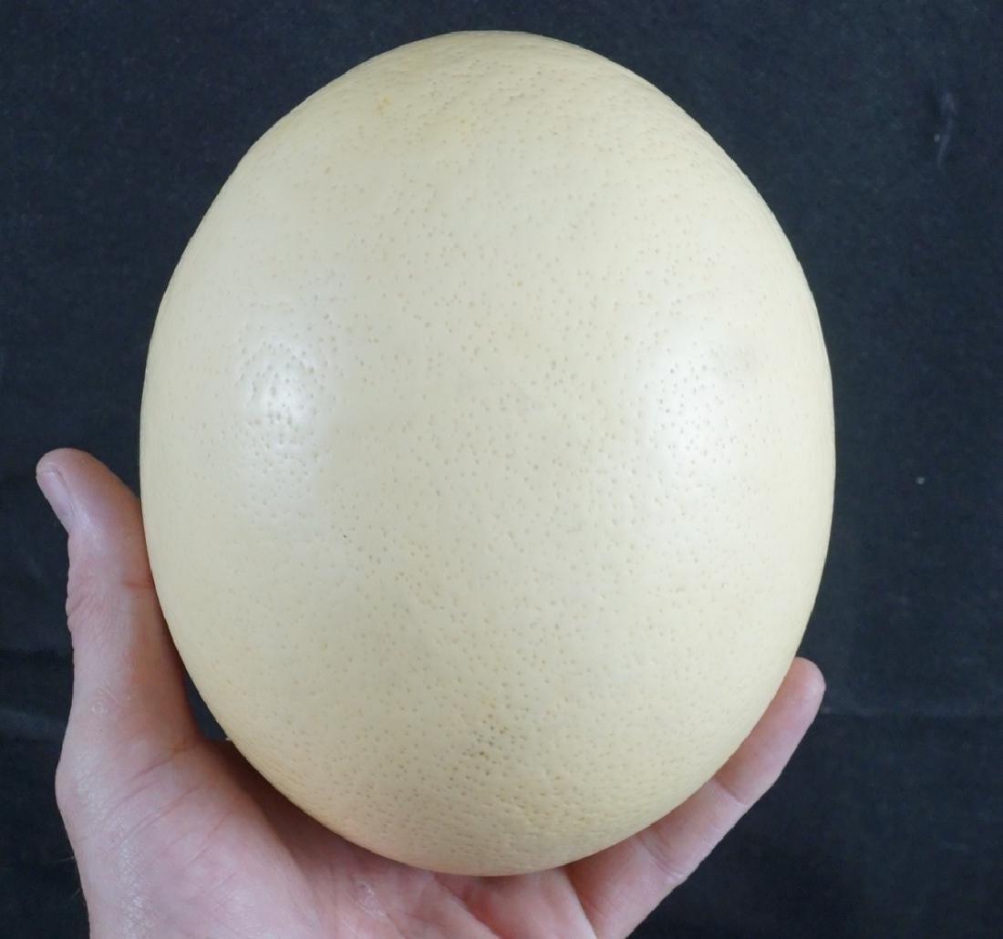 Ostrich Egg - 2