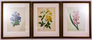 PJ Redoute Set of 3 Botanical Prints