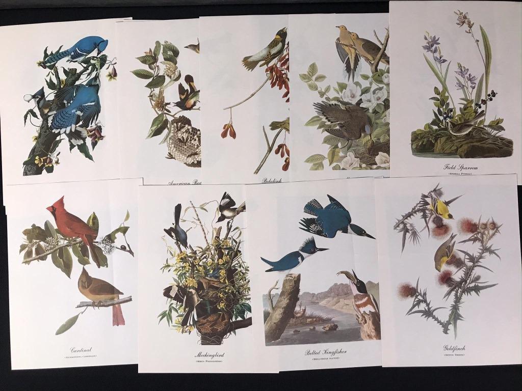 JJ Audubon Bird Prints (18)