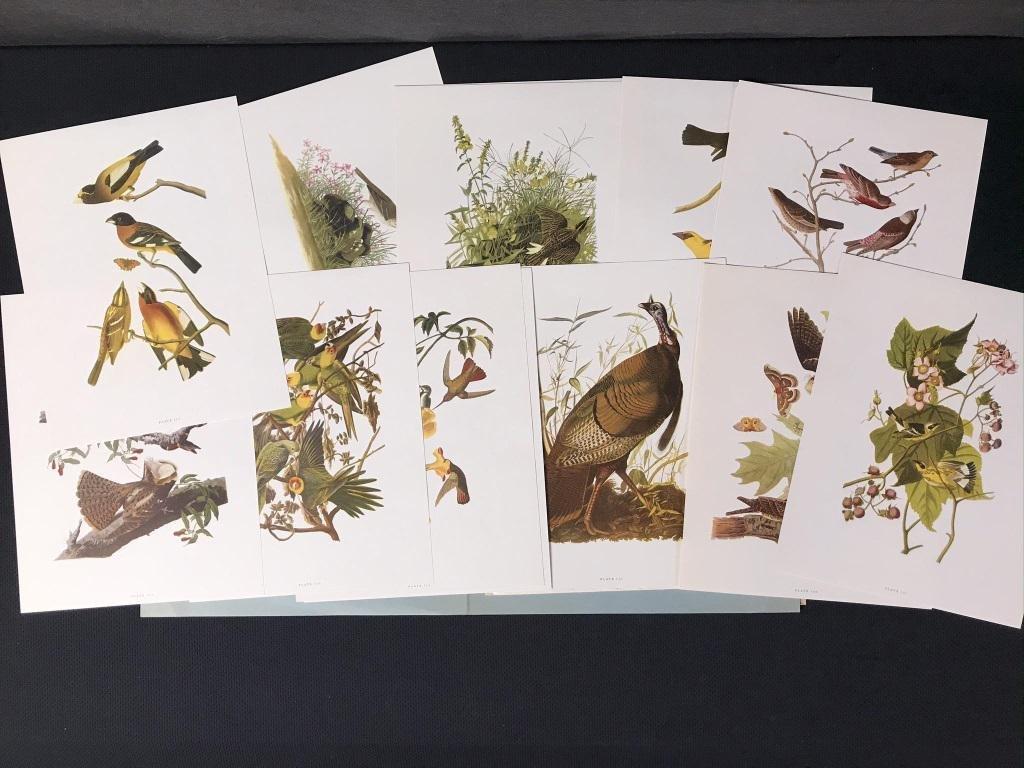 JJ Audubon Bird Prints (16)
