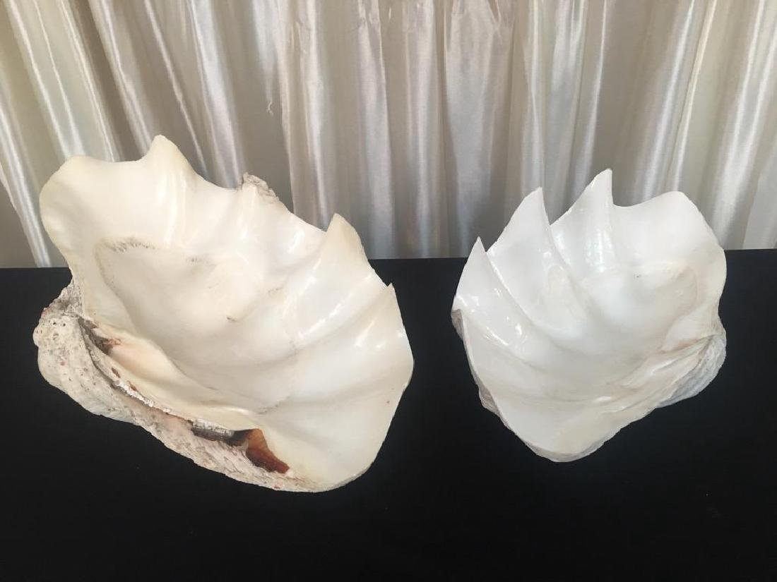 """Giant Vintage Tridacna Clam Shell 24"""" Pair - 8"""