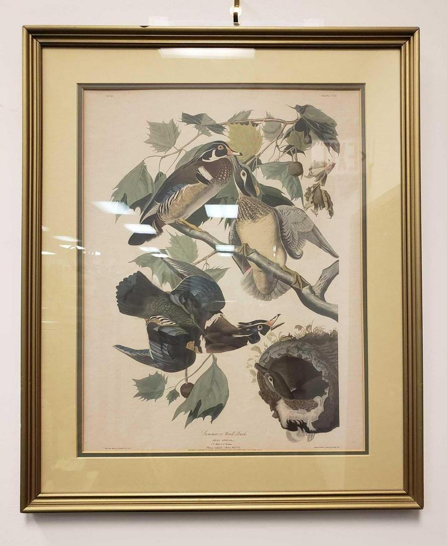 Summer or Wood Duck Illustration Print