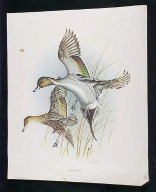 Dropping In Pintails Steve Dillard 1985 Signed Print