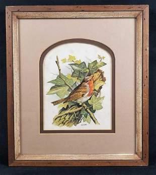 Framed Vortigern Bird Print by Dan Vaughn 1970