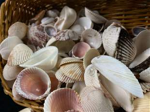 Mixed Lot of Antique Sea Shells In Basket