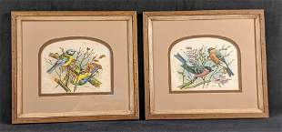 Framed Vintage Vortigern Bird Prints