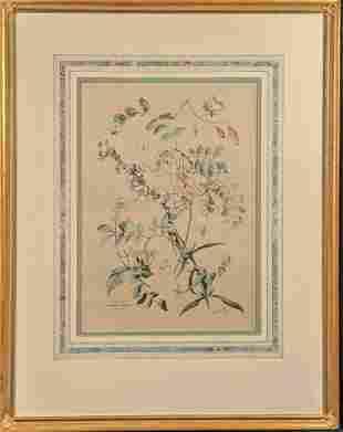 Vintage Framed Botanical Acacia Rose Print
