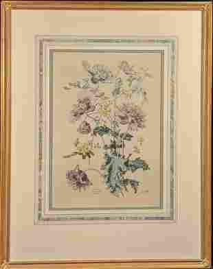 Vintage Framed Botanical Pavots Varies Poppies Print