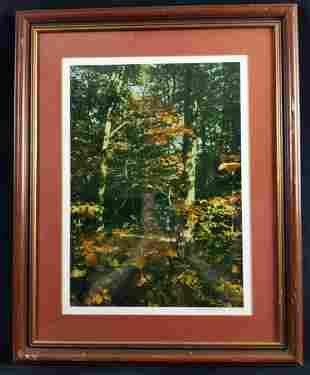 Framed Paul R Sanfield Jr Signed Photo Fall Trees