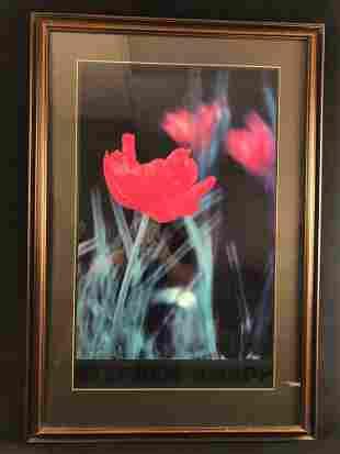 Stephen Knapp Red Tulips Print Photograph
