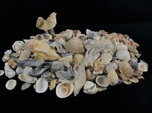 Vintage Lot Of Natural Sea Shells