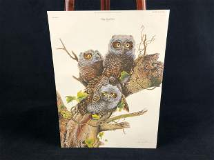 "Vintage Wildlife Artist Jim Oliver ""Baby Screech Owls"""