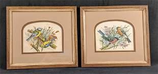 Framed Vintage Vortigern Bird Prints