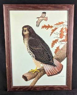 Hawk Painting by Karl Karalus