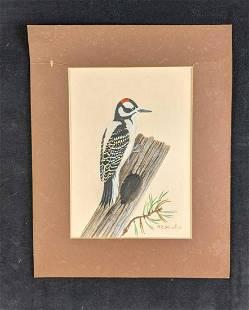 Downy Woodpecker by Karl Karalus