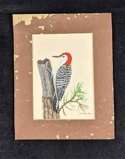 Red-bellied Woodpecker by Karl Karauls