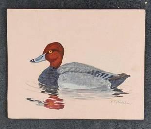 Redhead Duck by Karl Karalus