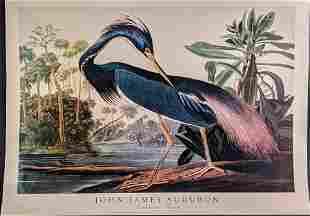 John James Audubon Louisiana Heron Poster Print