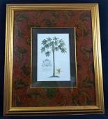 GD Ehret Delin And Sculp Botanical Litho Print