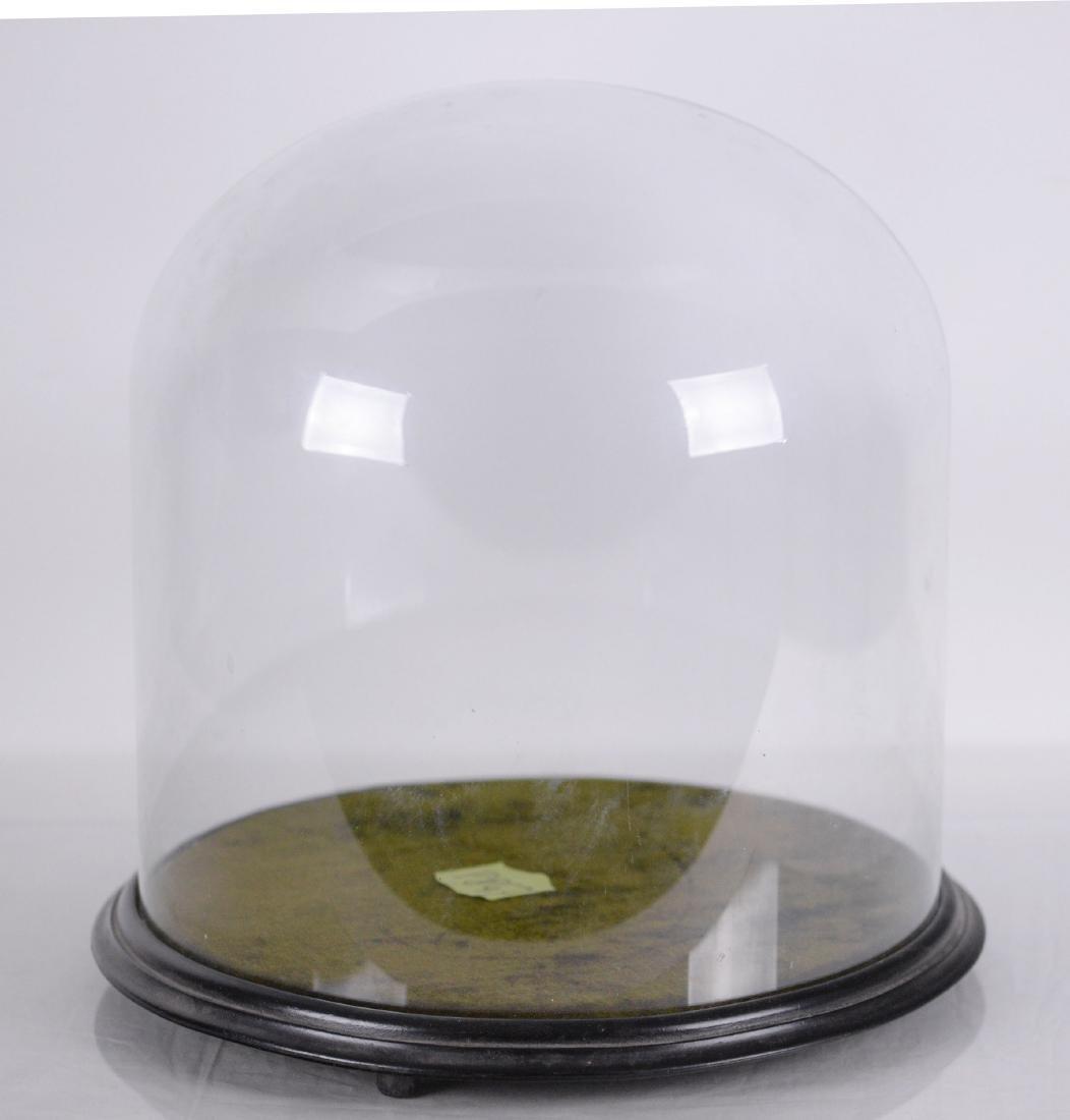 (XIX-XX)Cloche d'exposition en verre