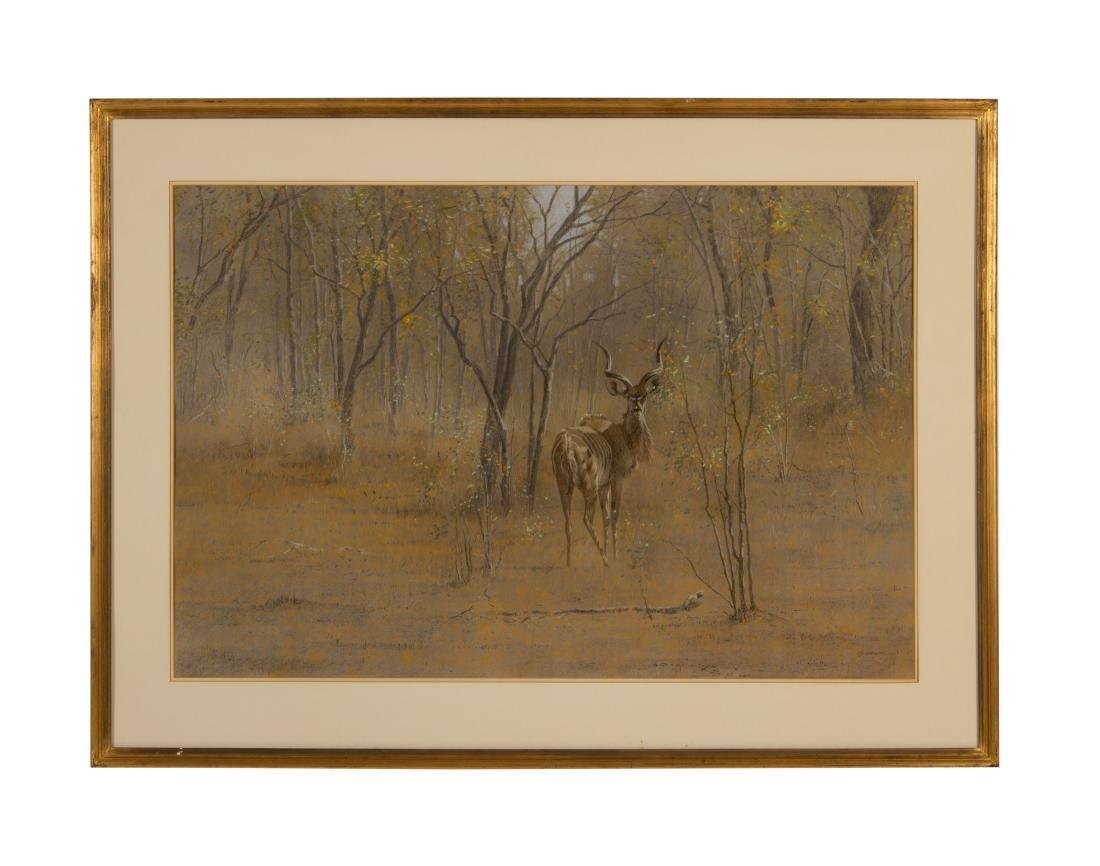 Kim Donaldson    Young Kudu Bull