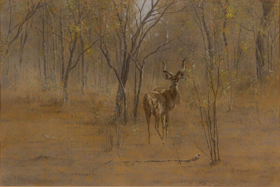 Kim Donaldson    Young Kudu Bull - 2