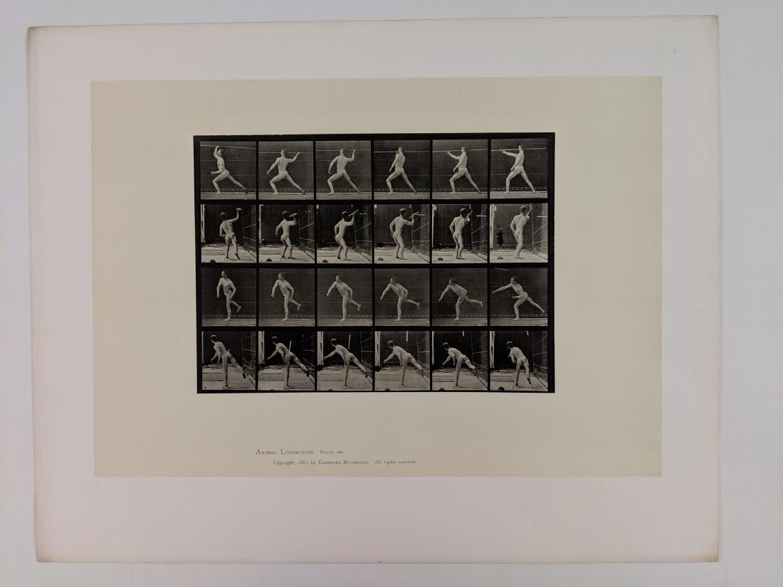 Eadweard Muybridge - Animal Locomotion: plate 360 - 2