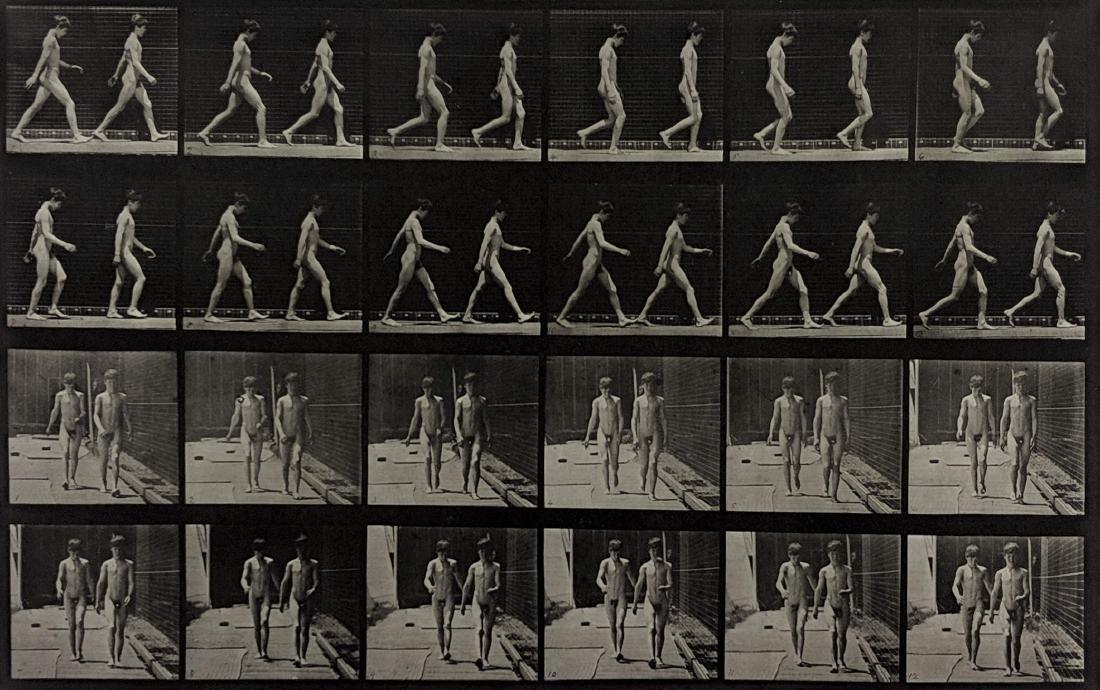 Eadweard Muybridge - Animal Locomotion - Plate 12