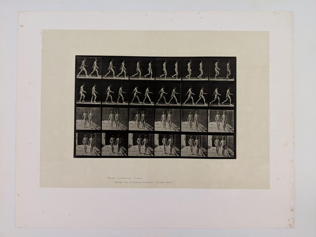 Eadweard Muybridge - Animal Locomotion - Plate 12 - 2