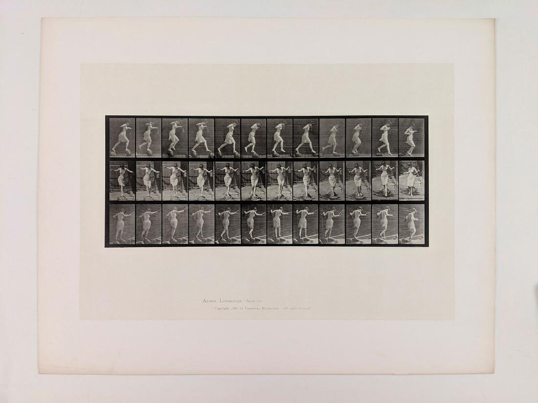Eadweard Muybridge - Animal Locomotion: Plate 175 - 2