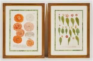 Unknown Artist - Botanical Engravings (2)
